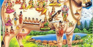 why-do-hindus-worship-the-cow1