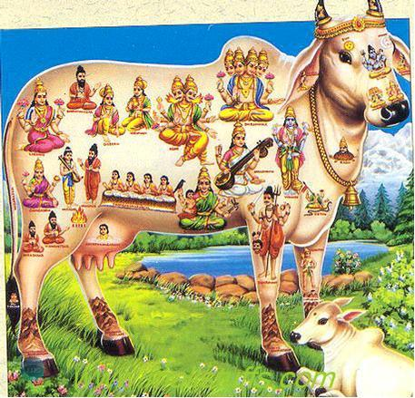 Why do Hindus worship the cow? | National Hindu Students' Forum (UK)